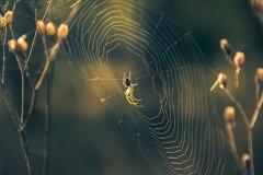 Spinne ist zu Hause